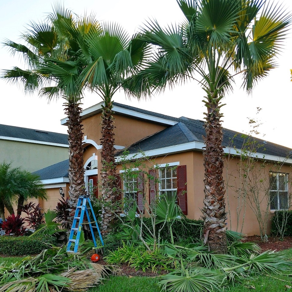 Landscape Designer Tampa