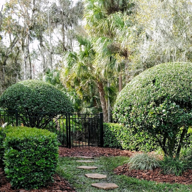 Medscapes Landscaping Tampa FL