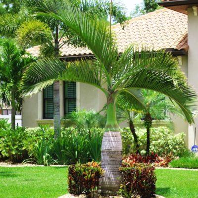 Medscapes Tampa Landscaping Design