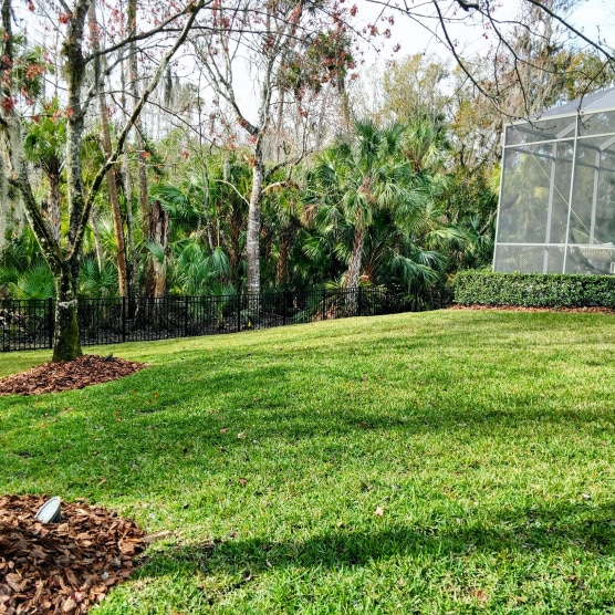 Resod Lawn Care Tampa FL