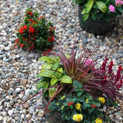 Xeriscaping Landscaping Companies Tampa FL