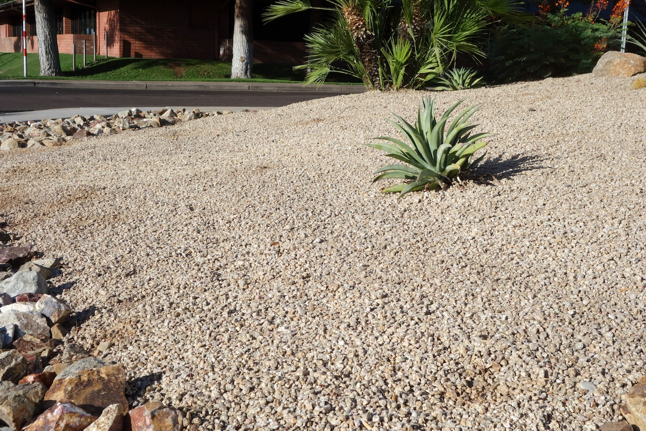 Xeriscaping Tampa
